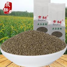 岁耕新品黑小米农家优米五谷粗粮黑色小米粮油杂粮米面500g