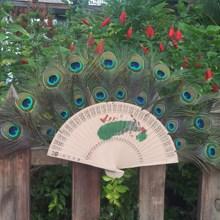 天然孔雀羽毛扇傣族特殊手工工艺品真孔雀羽毛扇家居舞蹈工艺扇子