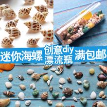 天然贝壳小海螺各种迷你宝螺套装 微景观diy饰家居摆设鱼缸造景