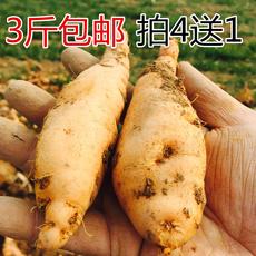农家新鲜生地黄 正宗焦作特产四大怀药怀地黄种子 鲜生地黄500克