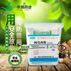 兽药原粉 70%阿莫西林可溶性粉 猪药鸡药鱼药含克拉维酸钾