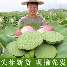 现摘新鲜水果嫩莲蓬 3斤 天然野生鲜甜生吃莲子 湘潭农家莲米即食