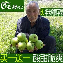 昭通丑甜心青苹果水果包邮批发新鲜酸脆当季整箱现摘现发10斤苹果
