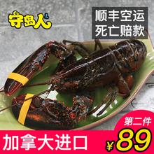 守岛人波士顿龙虾鲜活大龙虾海鲜超大特大加拿大野生波龙1 10斤
