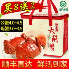 现货阳澄湖大闸蟹鲜活特大螃蟹公蟹4.0两母蟹3.0两10只礼盒装