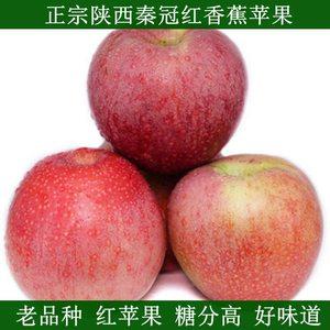 当季陕西老树秦冠<span class=H>红香蕉</span>面<span class=H>苹果</span>冰糖心新鲜水果5斤产地直发