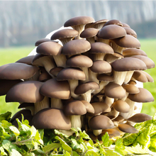 Potted Edible Fungi Potted Edible Mushroom Balcony Balcony for Children's Mushroom Cultivation