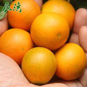 金桔特大果橘子 新鲜<span class=H>水果</span>2斤包邮现摘现发 广西特产金桔滑皮脆皮