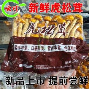 新鲜虎松茸600g 云南高原新鲜虎松茸蘑菇特产 野生菌顺丰空运包邮