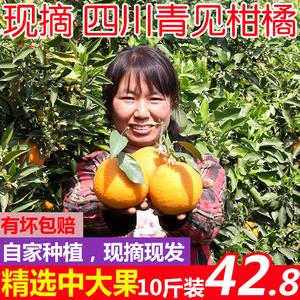 先鲜果源 现摘四川青见柑橘新鲜<span class=H>水果</span>丑橘10斤装中大果 非不知火