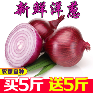 新鲜洋葱农家自种带箱10斤紫皮洋葱新鲜蔬菜<span class=H>水果</span>圆葱头毛时令低价