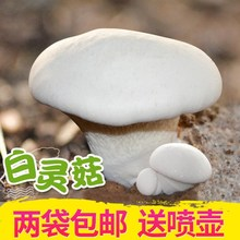 Family Mushroom Species Baoganoderma lucidum Golden Needle Seed Chicken Leg Mushroom Apricot Abalone Edible Mushroom Bar Free of Domestic Freight Lentinus Mushroom and Auricularia Auricularis