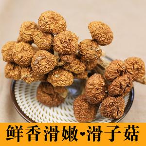 【寨吗 】滑子菇100g滑子蘑滑菇珍珠菇肉香干货菌菇古田特产