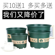 Plastic Dumpy Gallon Flower Pot Green Lotus Rose Flower Meaty Large Caliber Free of Domestic Freight Thickening Small Gallon Pot