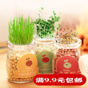 水培盆栽创意办公室DIY负离子小盆景 桌面迷你可爱小草微景观植物
