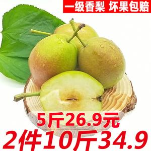 新疆库尔勒小香<span class=H>梨</span>5斤包邮当季新鲜水果红香酥整箱批发2件毛重10斤